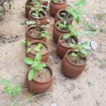 Tree Plantation under EcoRep Club Activity